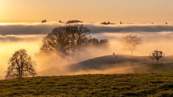 Über dem Nebel: Aargauer Leserfotos aus der Sonne, November 2020