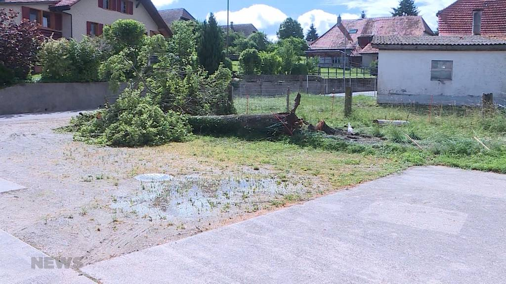 Lüterswil SO: Ein Mann wird von einem umstürzenden Baum getroffen