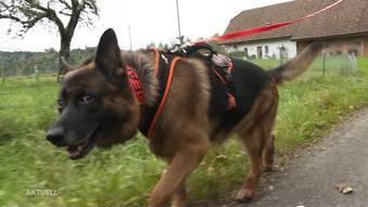 Dreitägige Suche nach dementem Rentner: Wie Schäferhund Jngo den Vermissten erschnüffelte