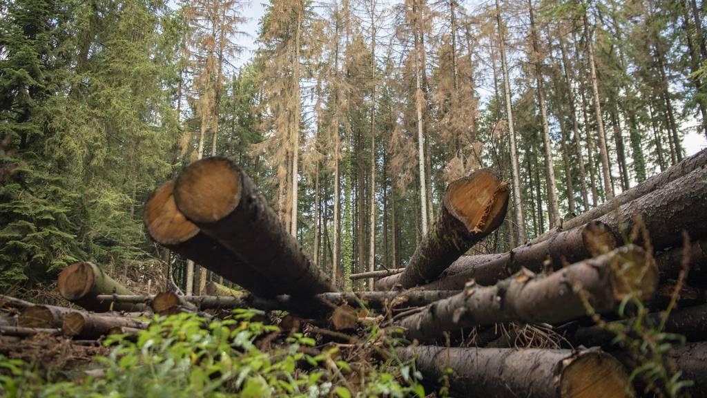 Parlament will Wälder besser vor dem Klimawandel schützen