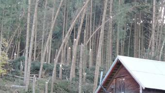 """Der Sturm """"Vaia"""" knickte in der Nacht auf den 30. Oktober in Appenzell Innerrhoden ganze Waldflächen wie hier in Gontenbad."""