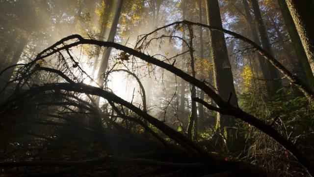 In einem Wald bei Brugg wurde eine Leiche gefunden (Symbolbild)