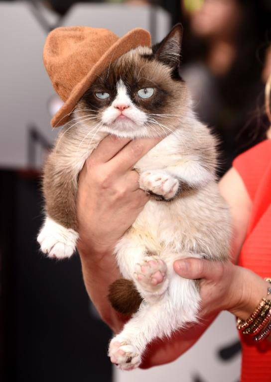 Grumpy Cat (© Getty Images)