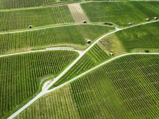 Im Klettgau SH gibt es den grössten Rebberg der Deutschschweiz. (Bild: Getty)