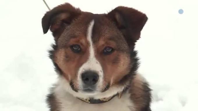 Kurs für Hofhunde / Tierheim-Büsi