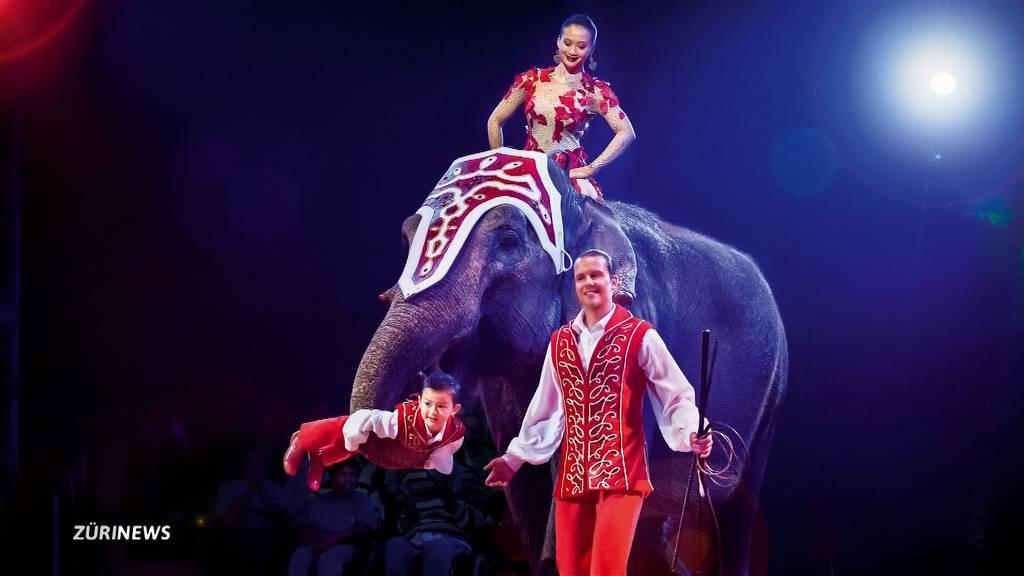 Circus Knie: Elefantenkuh Delhi an Altersschwäche gestorben