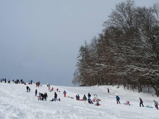 Freiämter und Luzerner geniessen den Neuschnee auf dem Horben