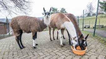 Tragischer Unfall im Tierpark Weihermätteli