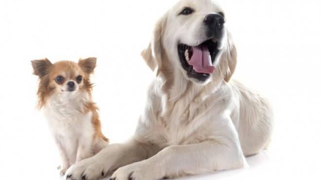 In der Schweiz leben 543 000 registrierte Hunde. Foto: Thinkstock