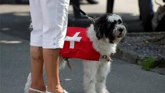 Per Veto bekämpft: In einer Verordnung wollte die Solothurner Regierung die Leinenpflicht für Hunde ausdehnen.Romina Amato/Reuters