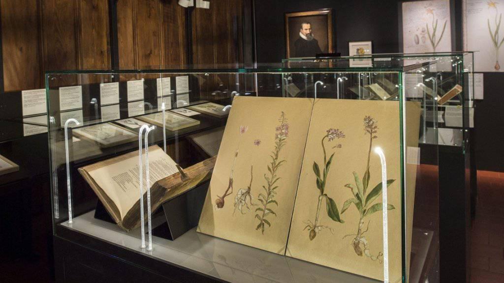 Blick in den Raum, in dem der Themenbereich Botanik behandelt wird. Gezeigt werden nicht nur Pflanzenzeichnungen aus der Sammlung Conrad Gessners, sondern auch Bilder anderer Künstler.