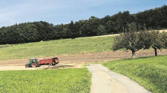 Der Standort für die geplante Windenergieanlage befindet sich auf der Krete des bewaldeten Heitersbergs.
