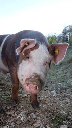 Die bz-Leser dürfen den beiden Schweinen einen Namen geben.