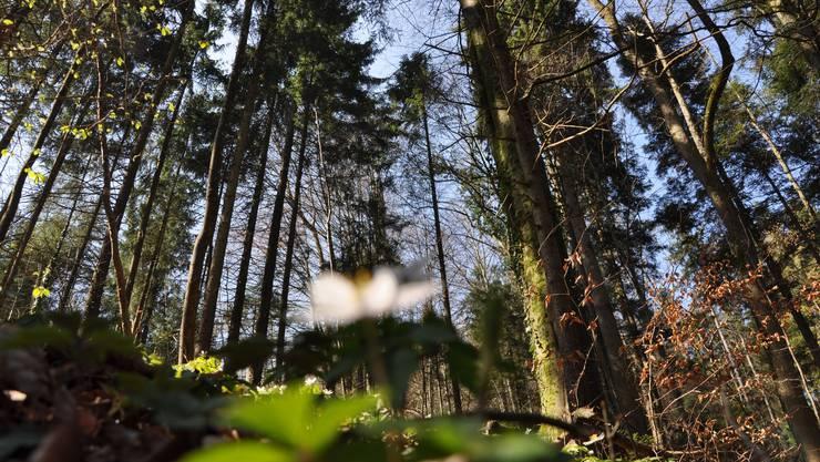 Es wird Frühling, und die frische Waldluft ruft.