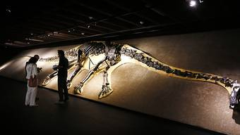 In der Nähe von Bordeaux haben Wissenschaftler einen 140 Millionen Jahre alten Schenkelknochen eines Sauropoden gefunden. (Themenbild eines Sauropoden)