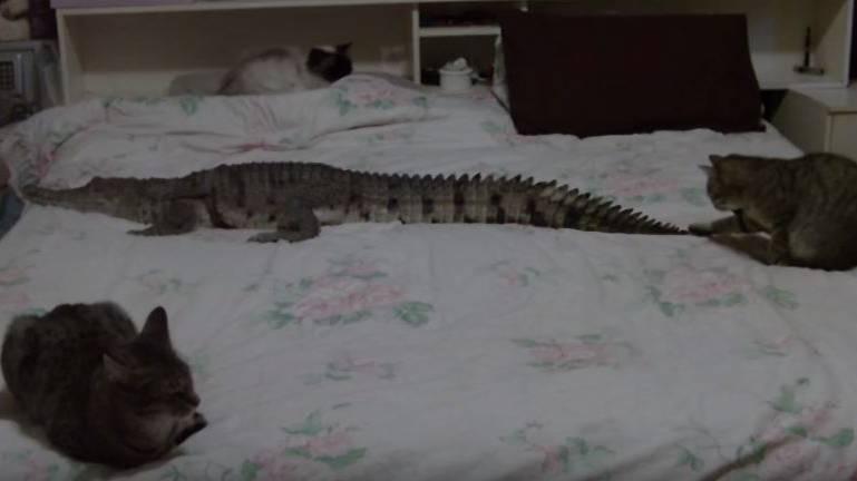 Johnie und die drei Katzen beim Mittagsschlaf.