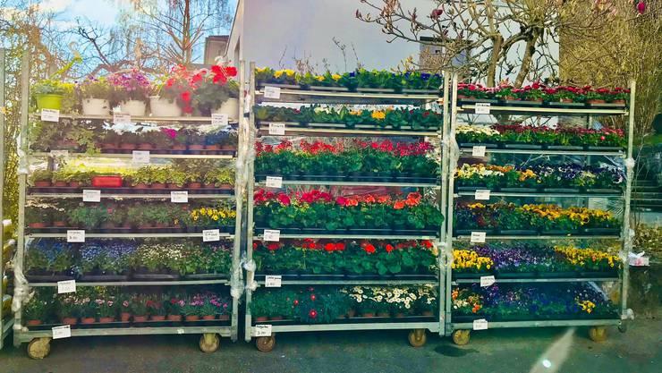 Schweizer Blumen seien ein einfaches Mittel, um seelische Blessuren zu lindern. (Archivbild)