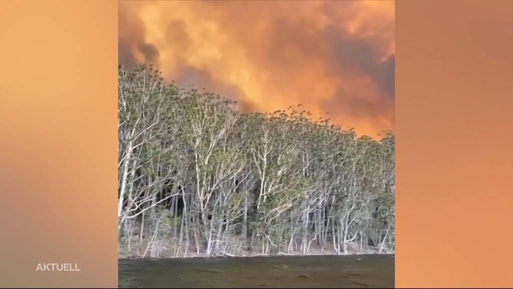 Wie erlebten Australien-Reisende die verheerenden Waldbrände?