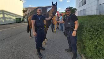 An der Wiesenstrasse in Schlieren wurde das Pferd wieder eingefangen.