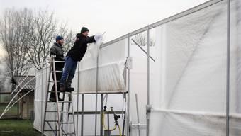 Jonas Zihlmann und Guido Hess erledigen letzte Arbeiten bei den erneuerten Folientunnels für den Gemüseanbau.