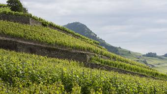 Schweizer Weinhändler machten ihren Job im vergangenen Jahr in den allermeisten Fällen gut, es gab weniger Anzeigen wegen Panschens. (Symbolbild)
