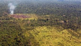 Der Regenwald im Amazonagebiet leidet weiter unter Rodung (Archiv)