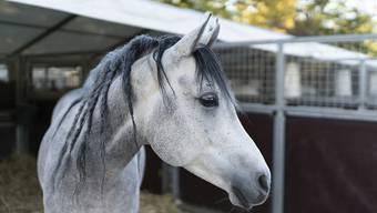 In den USA werden Pferde und andere Tiere, die psychisch kranken Passagieren gehören, kostenlos befördert. (Archivbild)