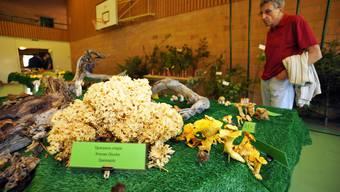 Pilzausstellung in Bettlach