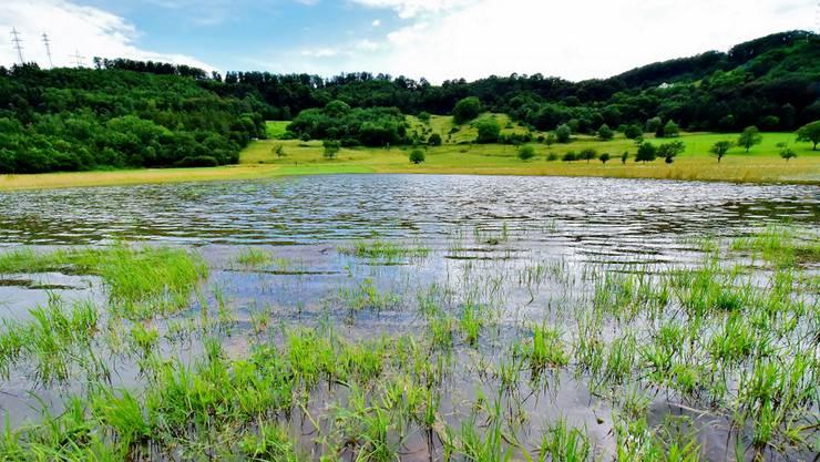 Feld zwischen Muttenz und Pratteln, das im Juni überschwemmt wurde.