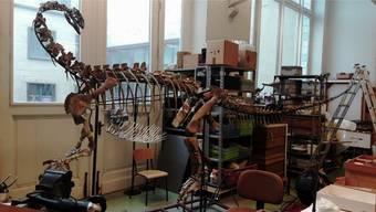 Ab Dezember ist «Ben» im Brüsseler Institut für Naturwissenschaften zu sehen. zvg
