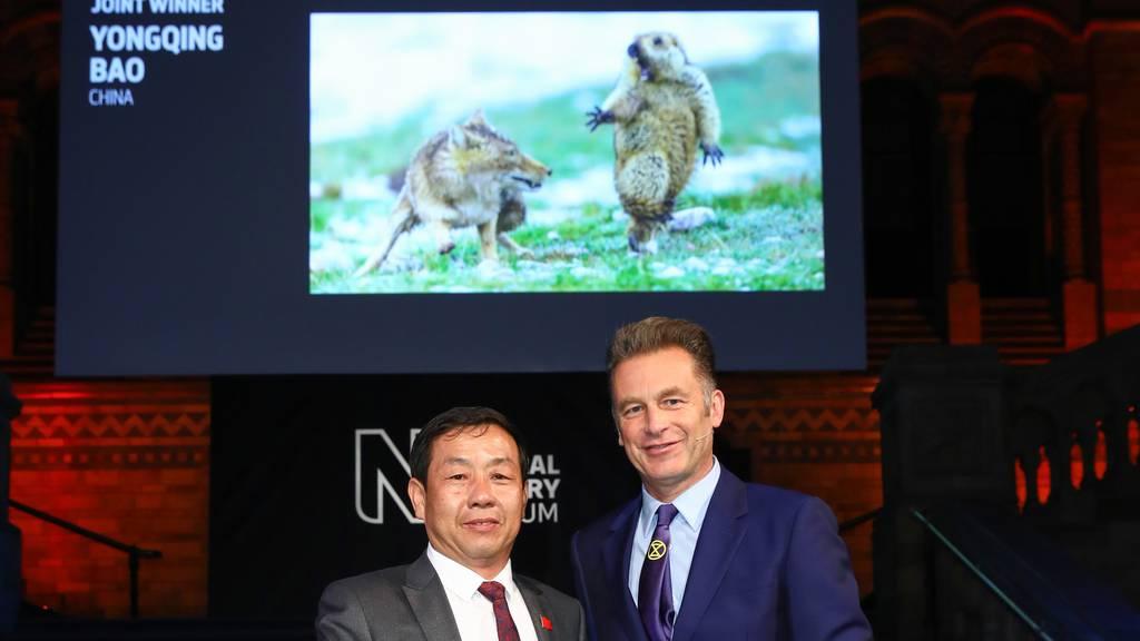 Erschrockenes Murmeltier gewinnt «Wildlife Photographer»-Wettbewerb