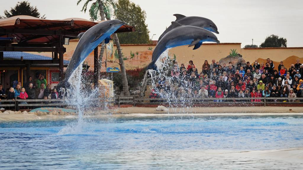 Delphin-Todesfall