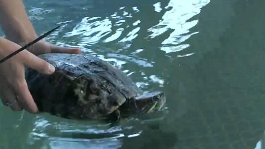 Schildkröten ziehen um