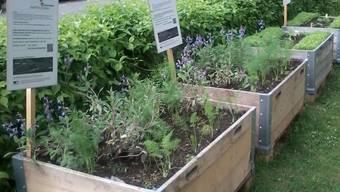 In solchen Hochbeeten soll Gemüse in der ganzen Stadt angepflanzt werden.