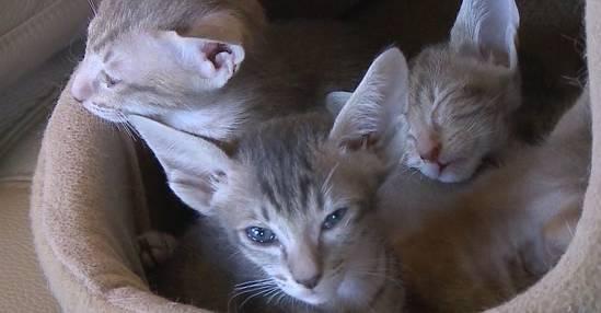 Prüfung für Katzenhalter?