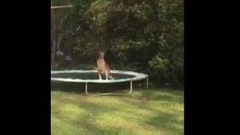 «Ninja Känguru» nennt Youtuberin Emma Heffernan das lustige Känguru in ihrem Garten.