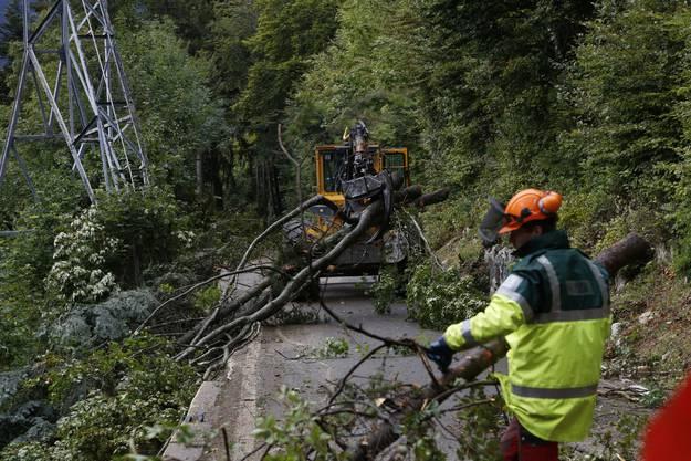 Die zur Strasse hinaufgezogenen Bäume werden mit mit speziellen Forstmaschinen zum Lastwagen transportiert