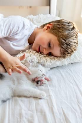 Den Katzen können Halter Abkühlung schaffen, indem man die Ohren aussen befeuchtet. Auch das Streicheln mit angefeuchteten Händen ist kühlend.