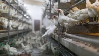 In den letzten fünf Jahren stieg die Hühnereier-Produktion in der Schweiz um 20 Prozent. Und weil auch mehr Poulet gegessen wurde, ging der Fleischkonsum insgesamt trotz Reduktion des Bestands an Schlachtrindern und -schweinen nicht zurück. (Symbolbild)