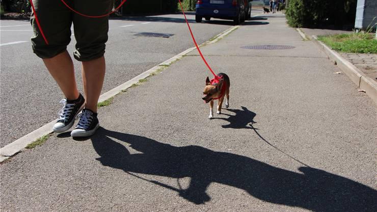 Die Hunde sollen laut dem neuen Polizeireglement im Siedlungsgebiet wie bisher an der Leine geführt werden müssen. Dagegen gibts Opposition. Symbolbild: NCH