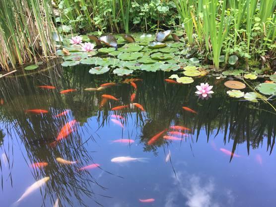 Fische am Sünnele