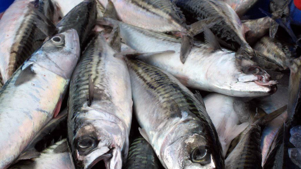 Frisch gefangene Makrelen - mit einem jährlichen Handelsvolumen von 144 Milliarden Dollar ist Fisch eines der am intensivsten gehandelten Güter.