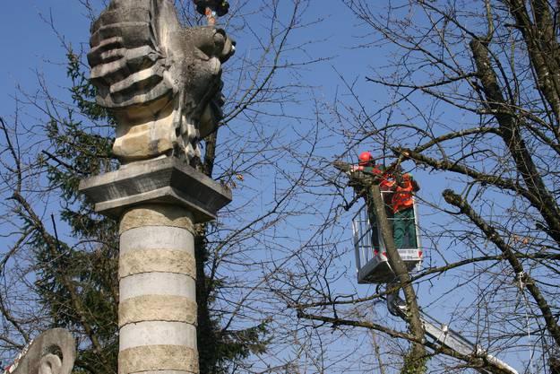 ... mussten die betroffenen Bäume aus Sicherheitsgründen gefällt oder gestutzt werden.