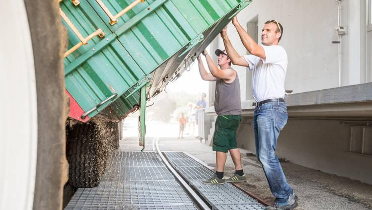 Kein Körnchen soll verloren gehen: Dominik Schmid (links) und Markus Schmid (rechts) rütteln am Container.