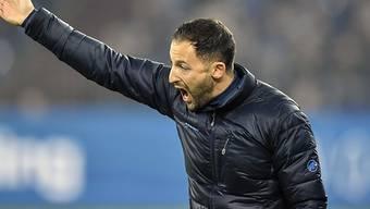 Schalkes Trainer Domenico Tedesco verzweifelt an der Seitenlinie