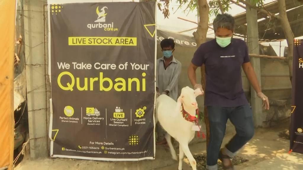 Pakistanischer Unternehmer startet Online-Markt für Eid-Tiere