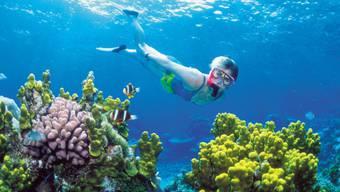 Eine Frau taucht im farbenprächtigen Great Barrier Reef. Wenn schon nicht so, dann wenigstens von oben.