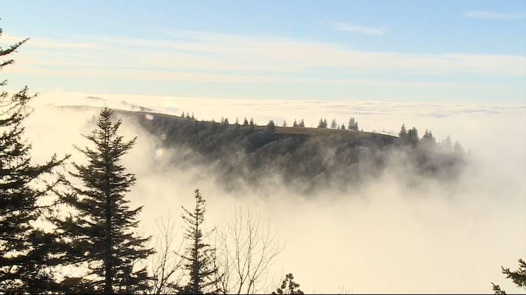 Hoch hinaus: An diesem Ort konnte man heute vor dem Nebel flüchten