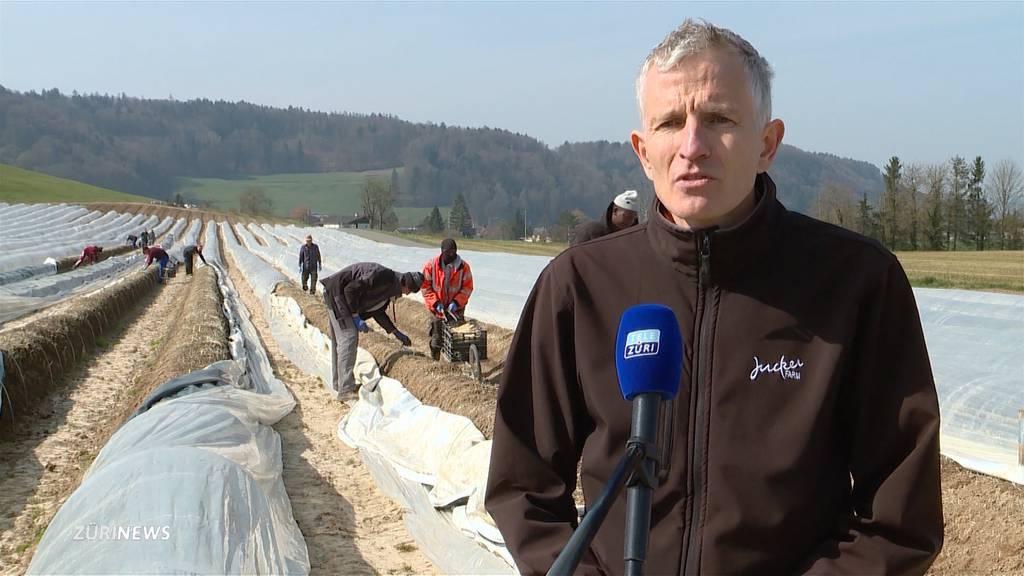 Jucker-Farm will Gastronomen als Erntehelfer anstellen