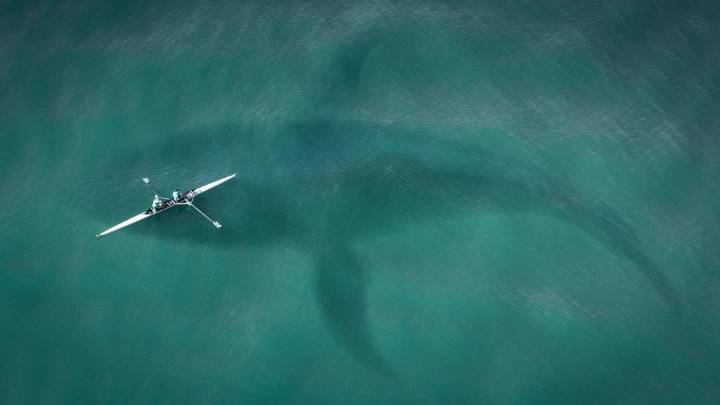Diese Tiere sind tödlicher als der Weisse Hai